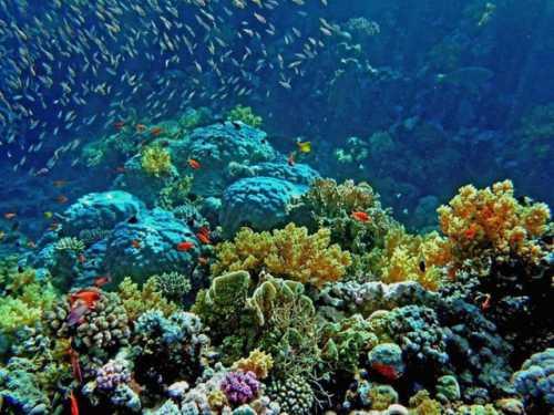 дайвинг на острове пхукет о пхукет: описание и программа экскурсии, фото