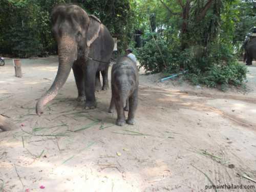 слонёнок вернулся к маме после 4