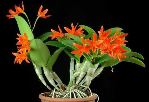 оранжевая моча у женщин: причины и лечение